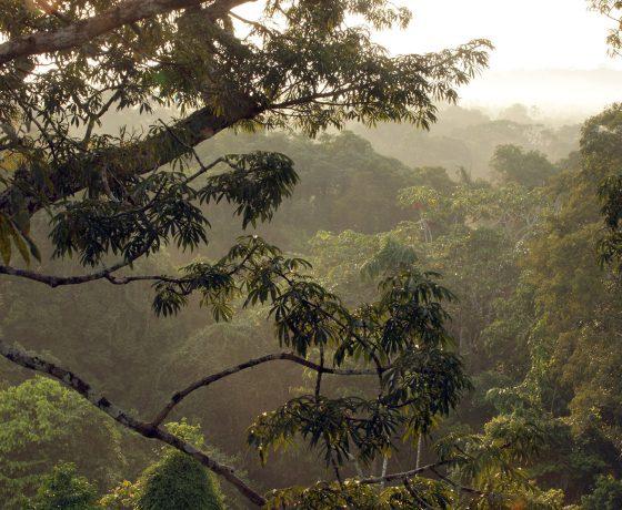 Amazonia tour Ecuador