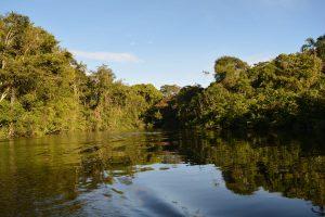 rio en la selva