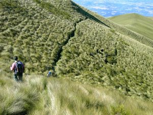 pasochoa trekking tour