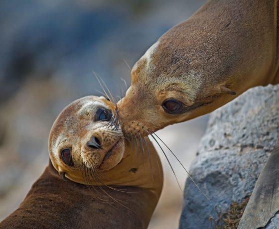 Galapagos crucero sea lion