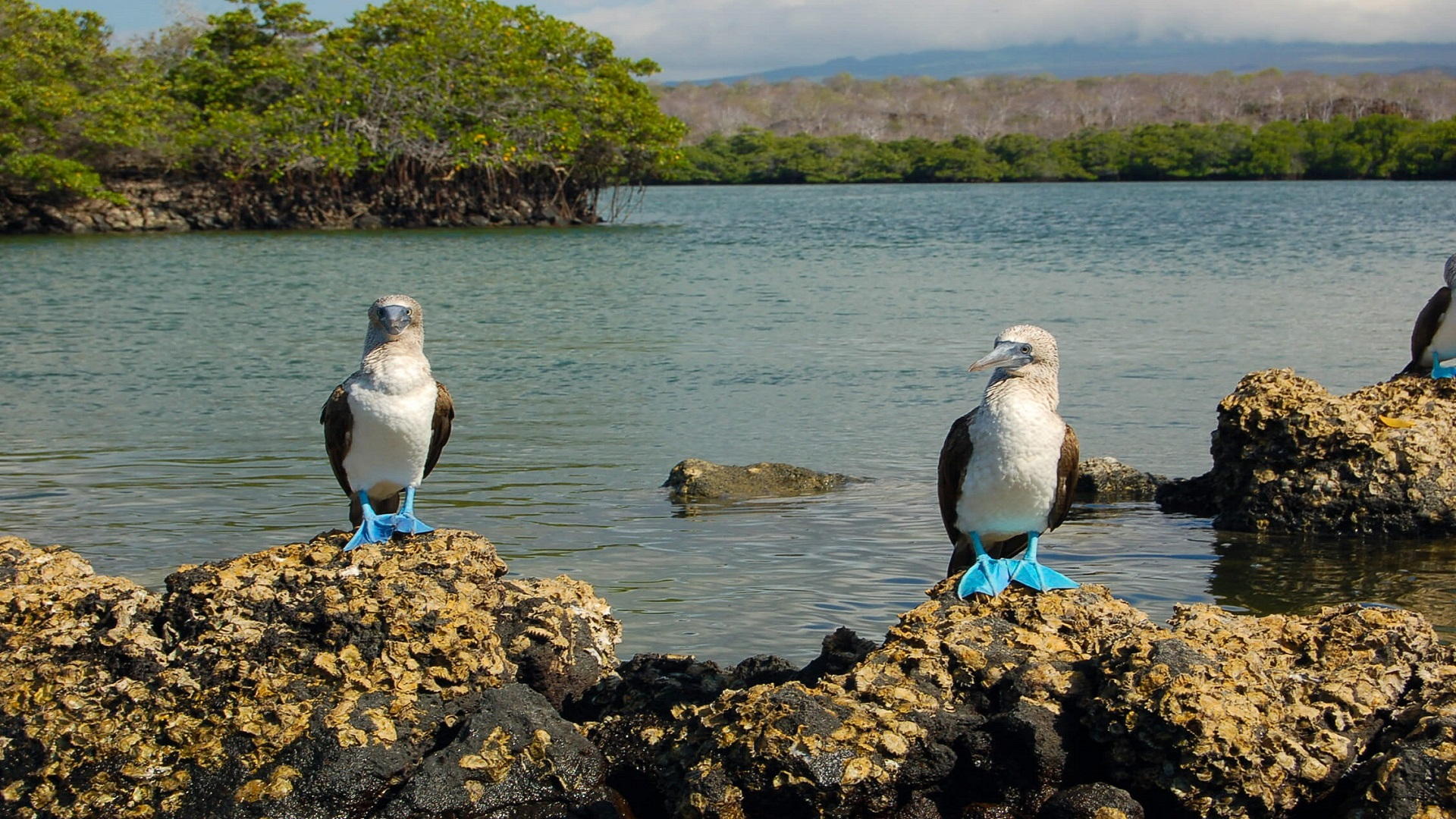 galapagos family vacations